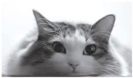 2010極楽ねこカレンダーフォトコンテスト開催! ●毎年恒例、今年で19回目の人気コンテスト●今年から携帯応募受付を開始! ●365名様のネコちゃんが2010年の日めくりカレンダーに
