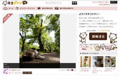 猫の写真画像で繋がるソーシャルメディア「ネコジマン」がRSSにも対応!
