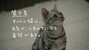 """キミがやって来た日から、我が家は猫の王国になりました。猫の王国CF""""あいする、しあわせ。憲法""""9月3日(土)公開!"""