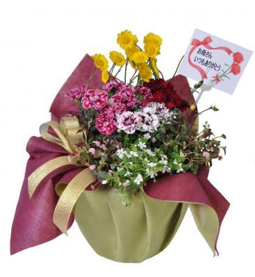 鉢植え専門店「花*花GULUCK」(はなはなぐりゅっけ)は、「母の日ギフト」の予約を開始<br />-【送料無料】ラッピング・メッセージカード付 -