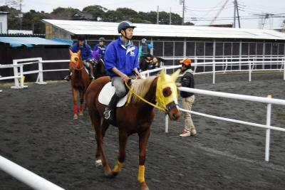 競馬のレース出走に向けて、競走馬を育成する千葉県八街市の「馬の学校 東関東馬事高等学院」の平成27年4月生の新規募集は、平成27年3月6日(金)まで、延長して募集を受け付ける。