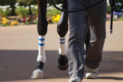 馬の学校 東関東馬事専門学院では乗馬クラブや育成牧場での職場体験インターンシップを10月14日から開始。競走馬の育成牧場や乗馬クラブの人材不足に貢献、乗馬クラブや育成牧場などの馬専門の求人受付を開始