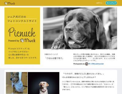 シニア犬の表情や佇まいが楽しい、シニア犬限定フォトコンテストサービス Picnuckリリースのお知らせ