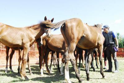 深刻な人材不足に悩む馬業界。馬の学校 東関東馬事専門学院では、平成29年度の募集より、独自の馬業界就職支援制度を適用し、未経験からJRA厩務員、育成牧場求人・就職をめざす若者に、授業費の50%を免除へ