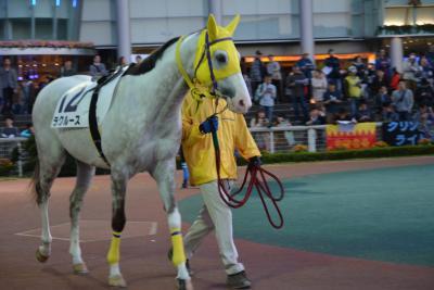 馬の学校 東関東馬事高等学院、東関東馬事専門学院の生徒たちが育成する競走馬の管理システム(馬登録情報、レース出走情報、レース出走結果、在厩情報)等が、リアルタイムで閲覧できるサイトが誕生しました。