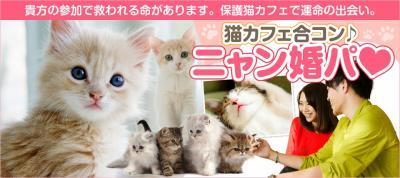 【動物愛護×婚活】保護された猫たちを救う婚活イベント! 里親を募集している猫が集まる保護猫カフェで「にゃん婚パ」を開催!