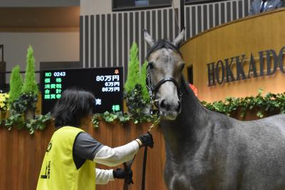 学生たちが、クラウドファンディングを通じ一般支援者の皆様からの支援で購入した「セリで他に買い手がない1歳馬(5頭)を購入」来春の競走馬としてのデビューに向け、本格的に取り組む馬事学院(バジガク)始動へ