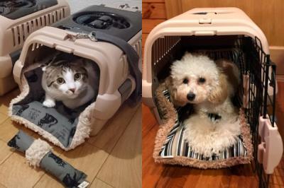 ペットが喜ぶ新しいスタイルのキャリー用クッション「キャリークッションベッド」、クラウドファンディングで支援者募集開始