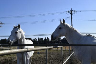引退馬の殺処分を減らしたい!競馬を引退し行き場のない引退馬をオーナー所有のまま預託へ!/競走馬を引退後、一定の期間内に乗馬で活用できる馬へ再調教、馬主が支払う引退後の預託費を大幅軽減へ(馬の年金制度)