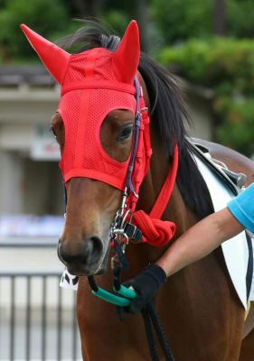 NHK◆目撃!にっぽん「バジガクモミジと踏み出す小さな一歩」で放送された馬の学校 馬事学院(通称:バジガク)令和2年10月生/令和3年4月生 新規生徒を開始へ