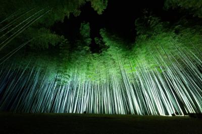 夜景評論家・丸々もとおプロデュース 若竹の杜 若山農場で『Bamboo Winter Lights 2020~光が愛でる、美しき竹夜の世界』がスタート!