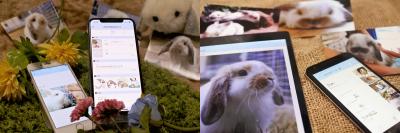 【世界で唯一】うさぎ専門写真シェア&飼育日記アプリのiPhone版がついに提供開始 ~Androidスマホ版に遅れること5年、ようやく『うさぎ広場』がアイフォンに登場です~